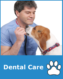Pet Dental Care Sammamish