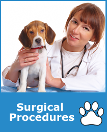 Pet Surgical Procedures Sammamish