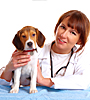 Adopting A New Pet? Try Klahanie animal hospital.